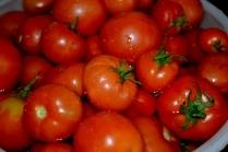 Когда высаживают рассаду помидор в теплицу