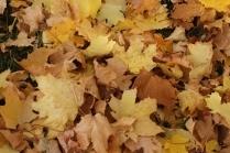 Поделки из осенних листьев для школьников