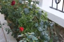 Клумба из роз своими руками