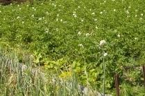 Какие удобрения вносить в почву весной