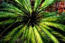 Как посадить финиковую пальму из косточки
